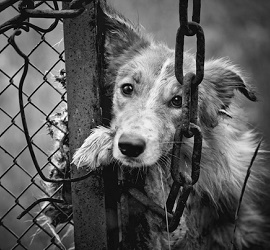 Animal Abuz