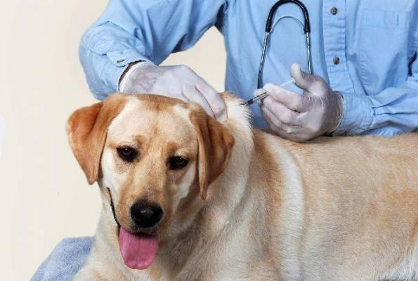 Comunicat de presă - ICCJ a decis ca vaccinul antirabic la câini și pisici să fie gratuit