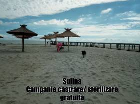 Our fight for animal welfare and health in Sulina continues