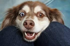 October 10, 2020 - World Dog Day